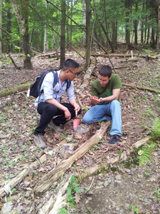 Andrew and Mike collecting Aphaenogaster in Centennial Woods